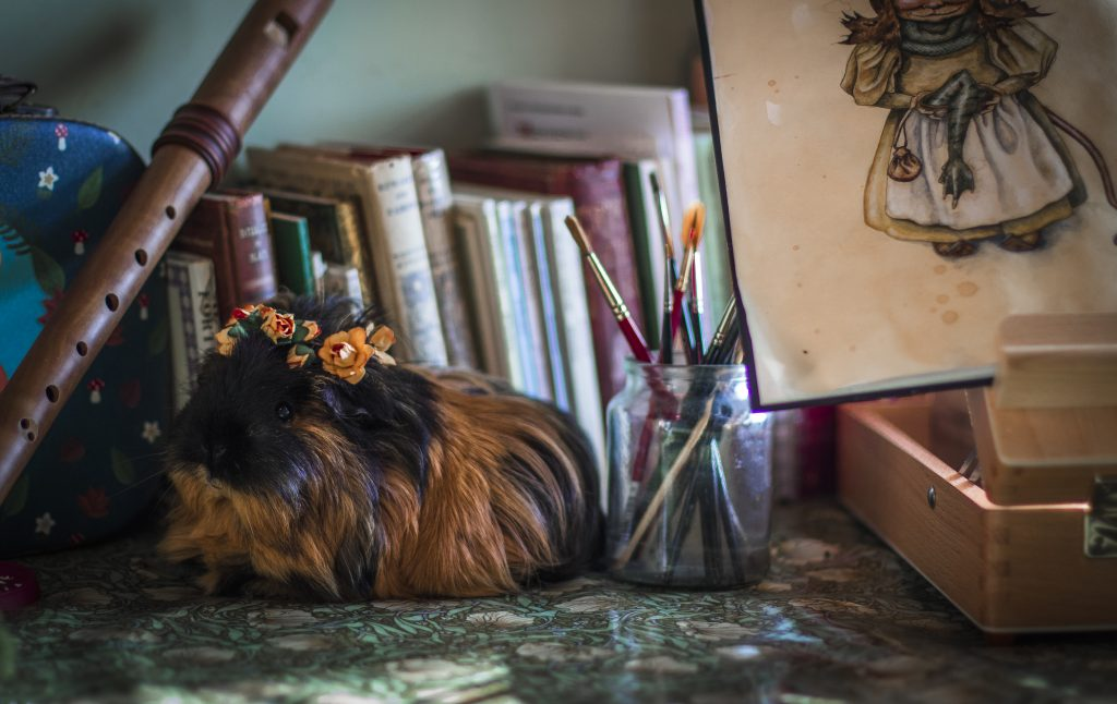 Guinea pig on a desk with paintbrushes