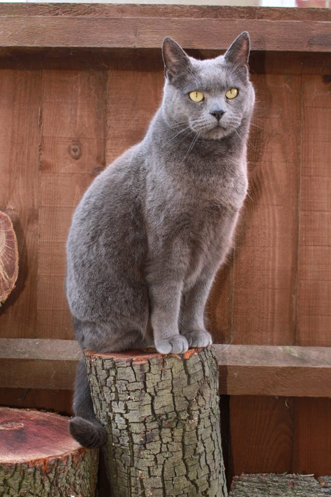 Cat sat on a log. Photographing your pet.