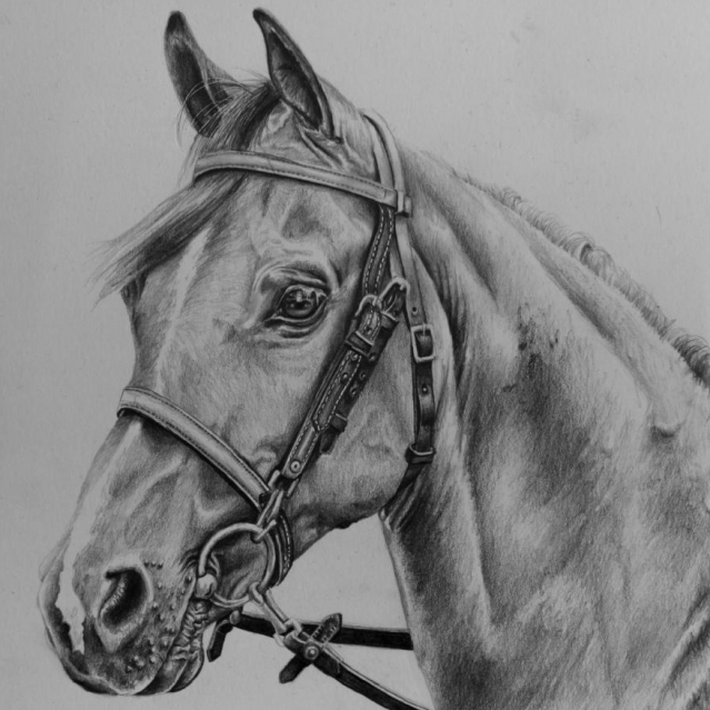 Horse Head drawing by Jessica Hilton