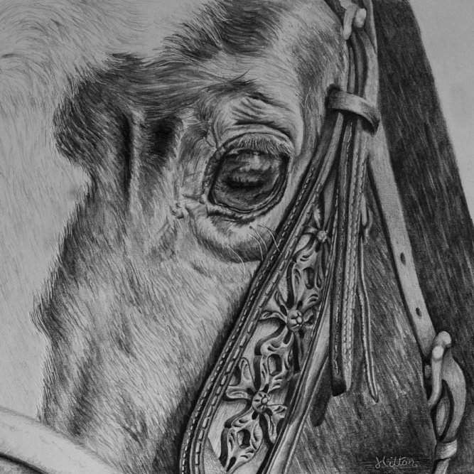 Horse head detail drawing by Jessica Hilton