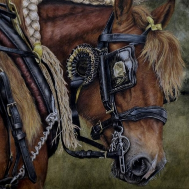 Suffolk Punch painting by Jessica Hilton