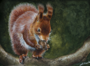 Red Squirrel painting by Jessica Hilton