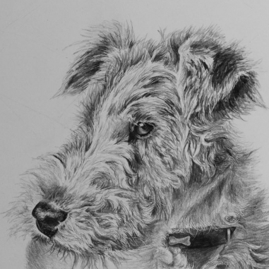 Wire Fox Terrier drawing by Jessica Hilton