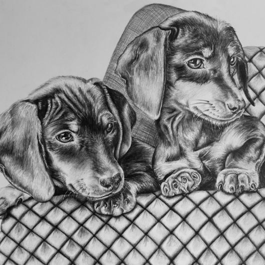 Dachshund Puppy drawing by Jessica Hilton
