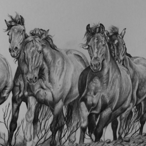 Running horses by Jessica Hilton