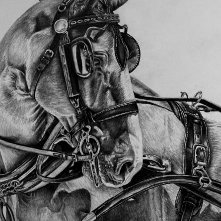 Gelderlander horse drawing by Jessica Hilton