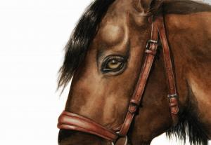 Andalusian horse painting by Jessica Hilton