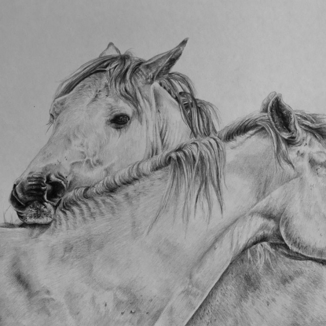 Grooming Horses drawing by Jessica Hilton