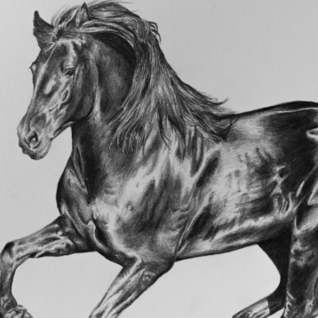 Galloping horse drawing by Jessica Hilton