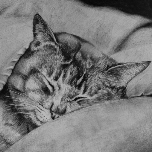 Sleeping cat drawing by Jessica Hilton